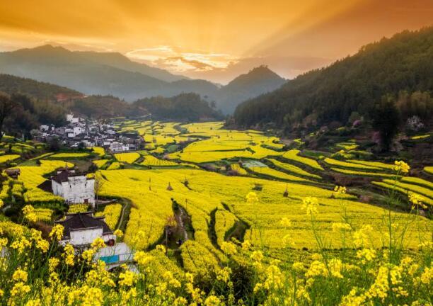 江西婺源旅游的话 几月份去油菜花最好看?