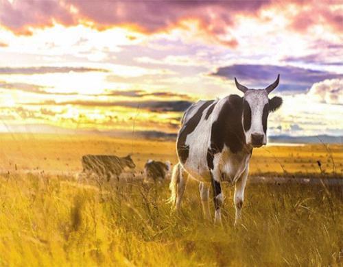 呼伦贝尔草原几月份最佳旅游时间
